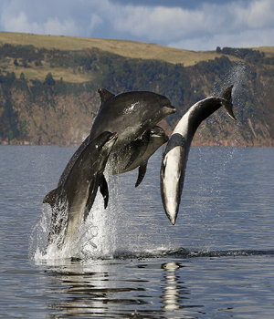 chanonry-point